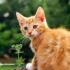 اسم زیبایی برای حیوان خانگی شما پیدا کنم